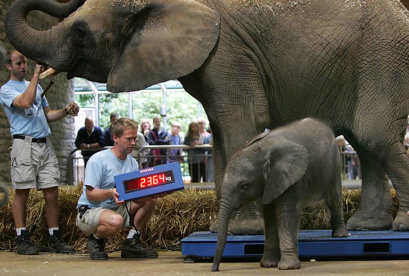 Elefantennachwuchs im Zoo Wuppertal