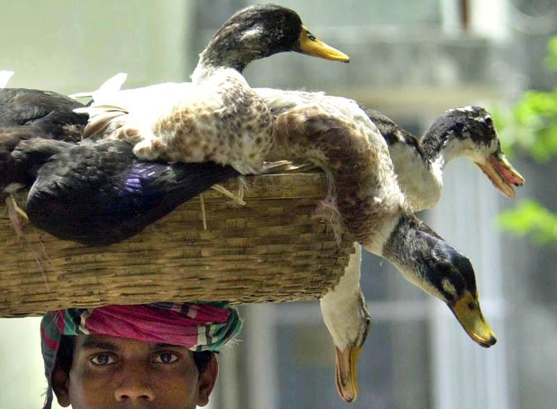 Entenverkauf auf einem Markt in Dhaka, Bangladesh