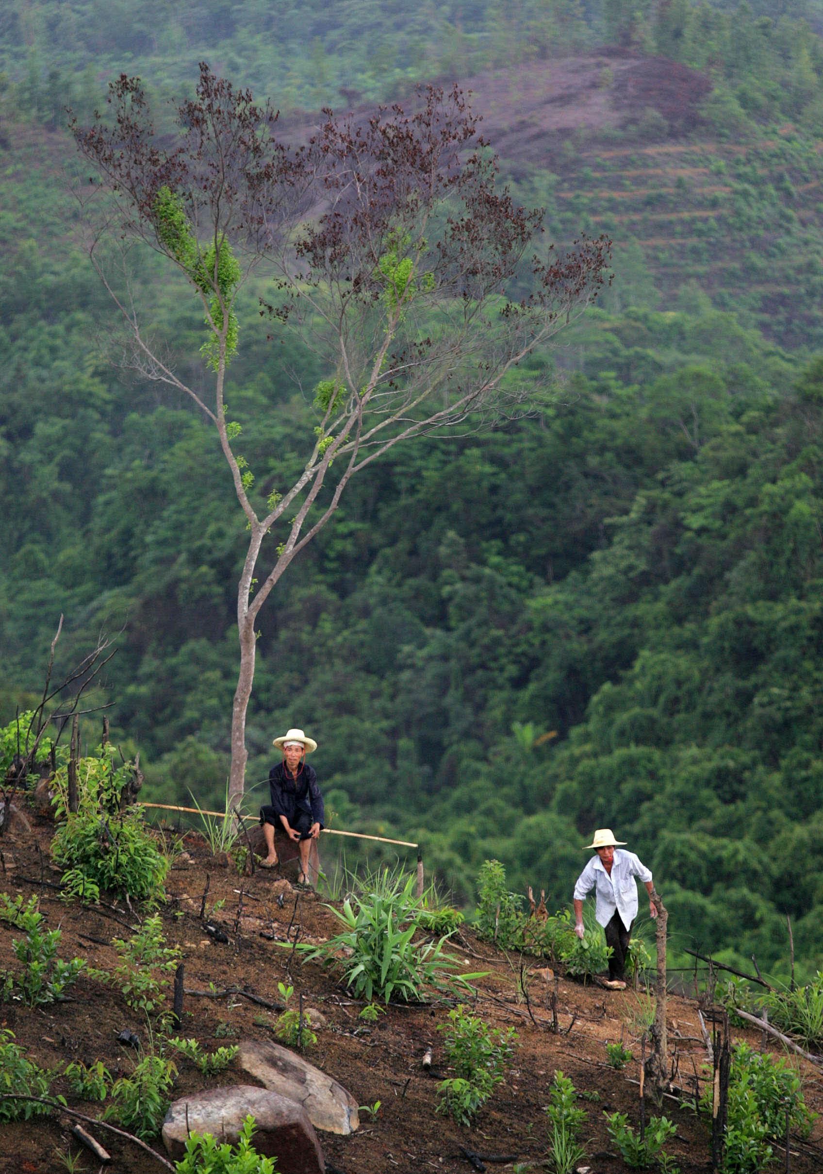 China hat Schlüsselrolle bei Urwaldvernichtung in Südostasien