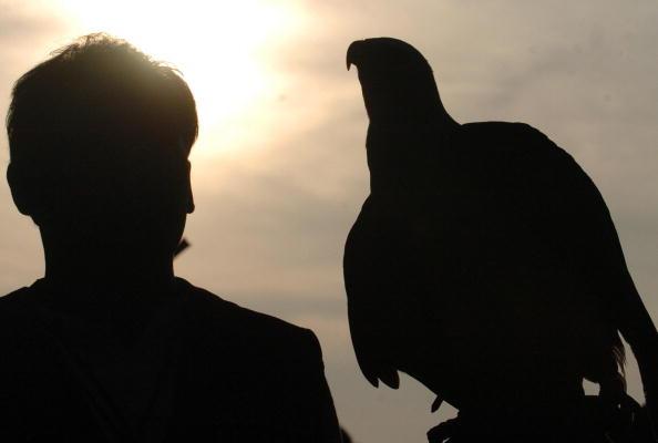 Brandenburgs Fischadler sind ein Exportschlager in Spanien