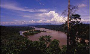 Auf einem Hektar Regenwald finden sich 250 verschiedene Baum- und annähernd 1.500 unterschiedliche Pflanzenarten. - Río Napo. (Foto - Dr. Jutta Ulmer und Dr. Michael Wolfsteiner)