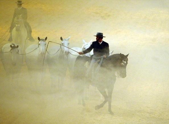 Internationale Pferdeshow