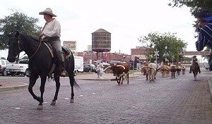 AVENUE STROLL, TEXAS STYLE: The cattle drive down Exchange Avenue in Ft. Worth is the only one of its kind in the world. (Terri Hirsch)