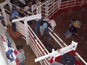 SADDLE UP? Pro bull riding at Billy Bob