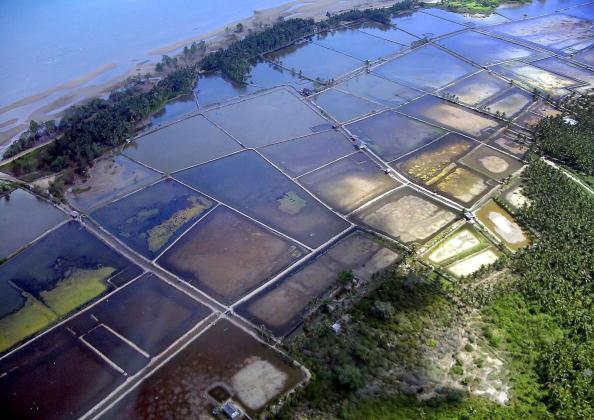 Erhöhte Gehalte an Naturstoffen in Fisch potentiell krebserregend