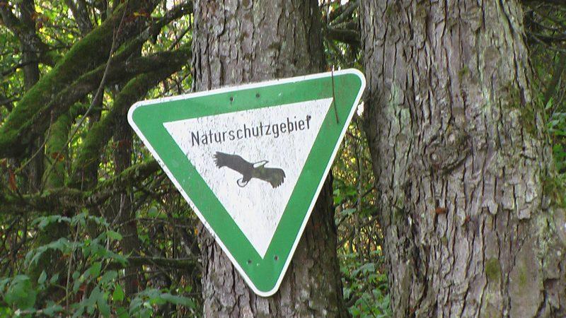 """Verwaltungsgericht entscheidet: Naturschutzgebiet """"Ruhlsdorfer Bruch"""" bleibt frei von Genmais"""