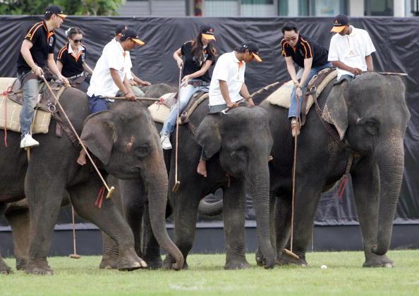 Polo auf Elefant
