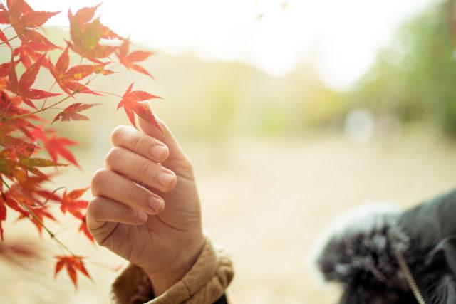 Herbst Von Rainer Maria Rilke