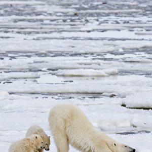 (AP Photo/ The Canadian Press, Jonathan Hayward)