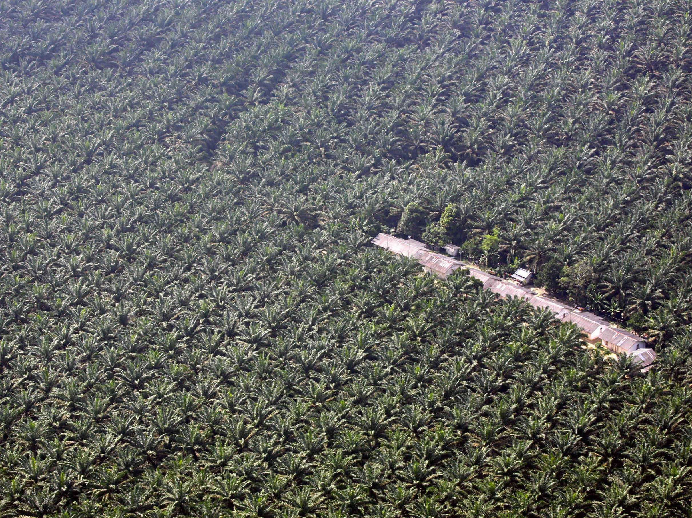 """Indonesische Mahakam-Region ist """"Bedrohter See 2008"""""""
