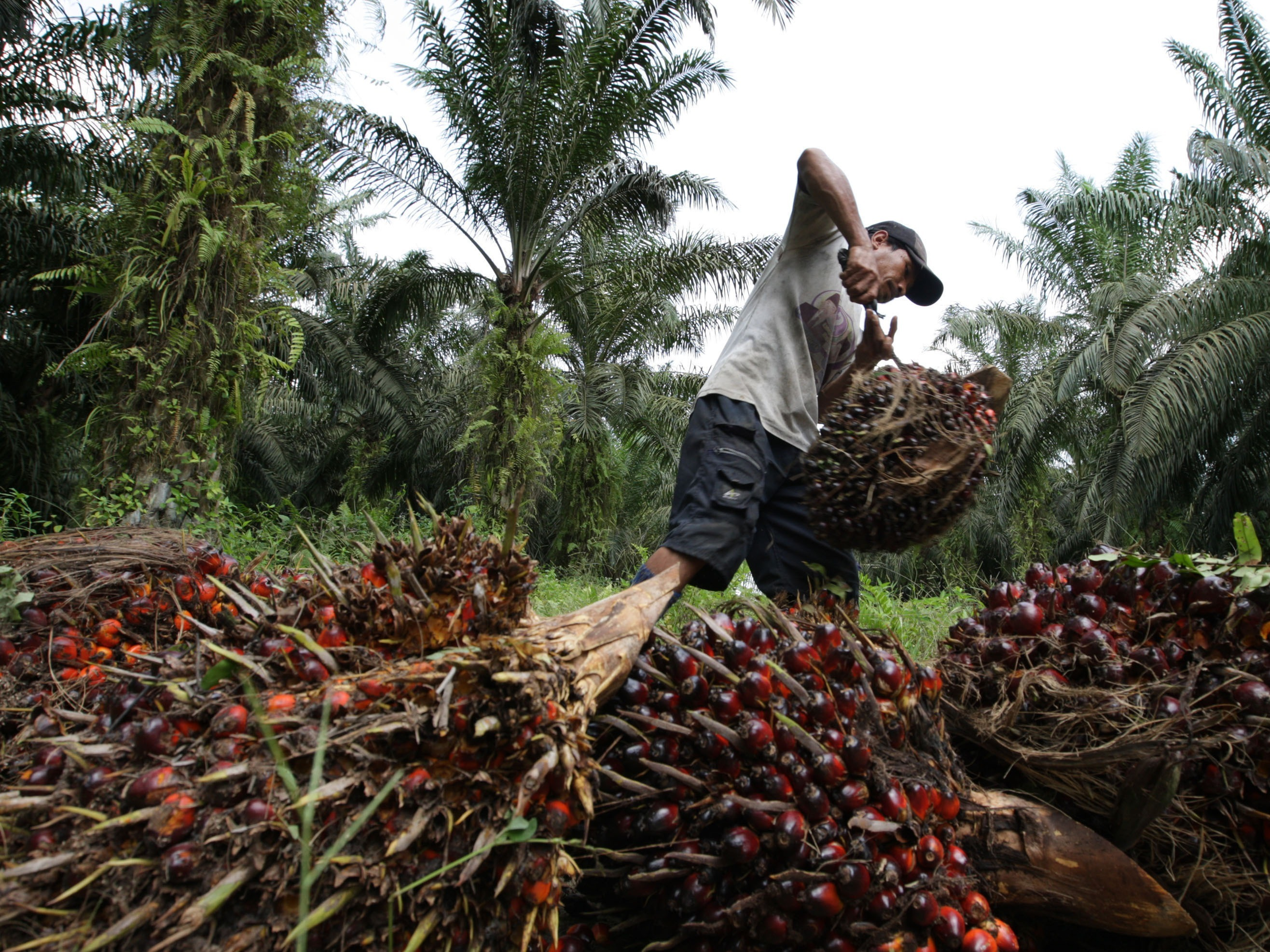 Entwicklungsminister Müller fordert Lieferketten ohne Regenwald-Zerstörung