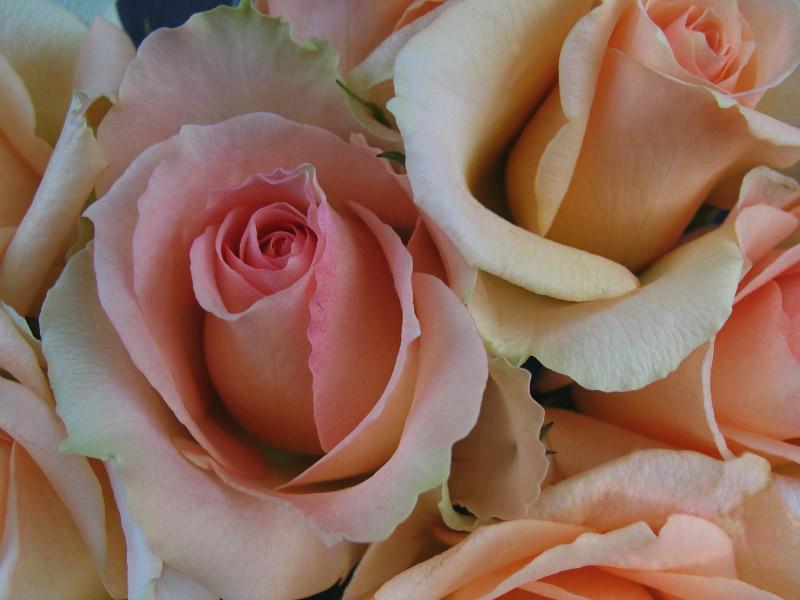 Rosen – nicht nur zum Valentinstag – mal anders