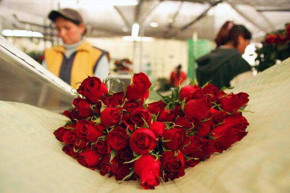 Zum Valentinstag 450 Fußballfelder voller Rosen