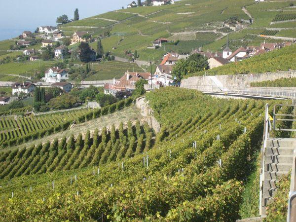 Die hängenden Weingärten des Lavaux