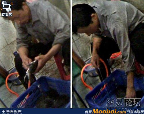 Lebensmittelskandal bei Weichschildkröten in China