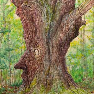 """""""Huorn"""": """"Tolkiens Märchenwelt - Immer noch in Liebe mit alten Bäumen und Tolkiens Märchenwelt. Der Name """"Huorn"""" beschreibt in Tolkiens Buch """"Der Herr der Ringe"""" einen Baummenschen, der sich entschlossen hat, langsam wieder zum Baum zu werden."""""""