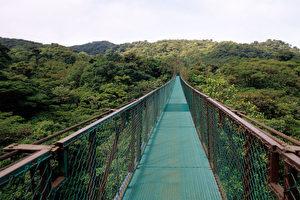 Hängebrücke über den Urwaldriesen Monteverdes. (Jutta Ulmer)