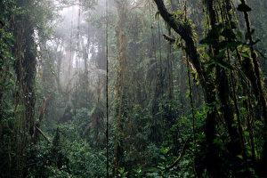 Nebelwald in Monteverde. (Jutta Ulmer)