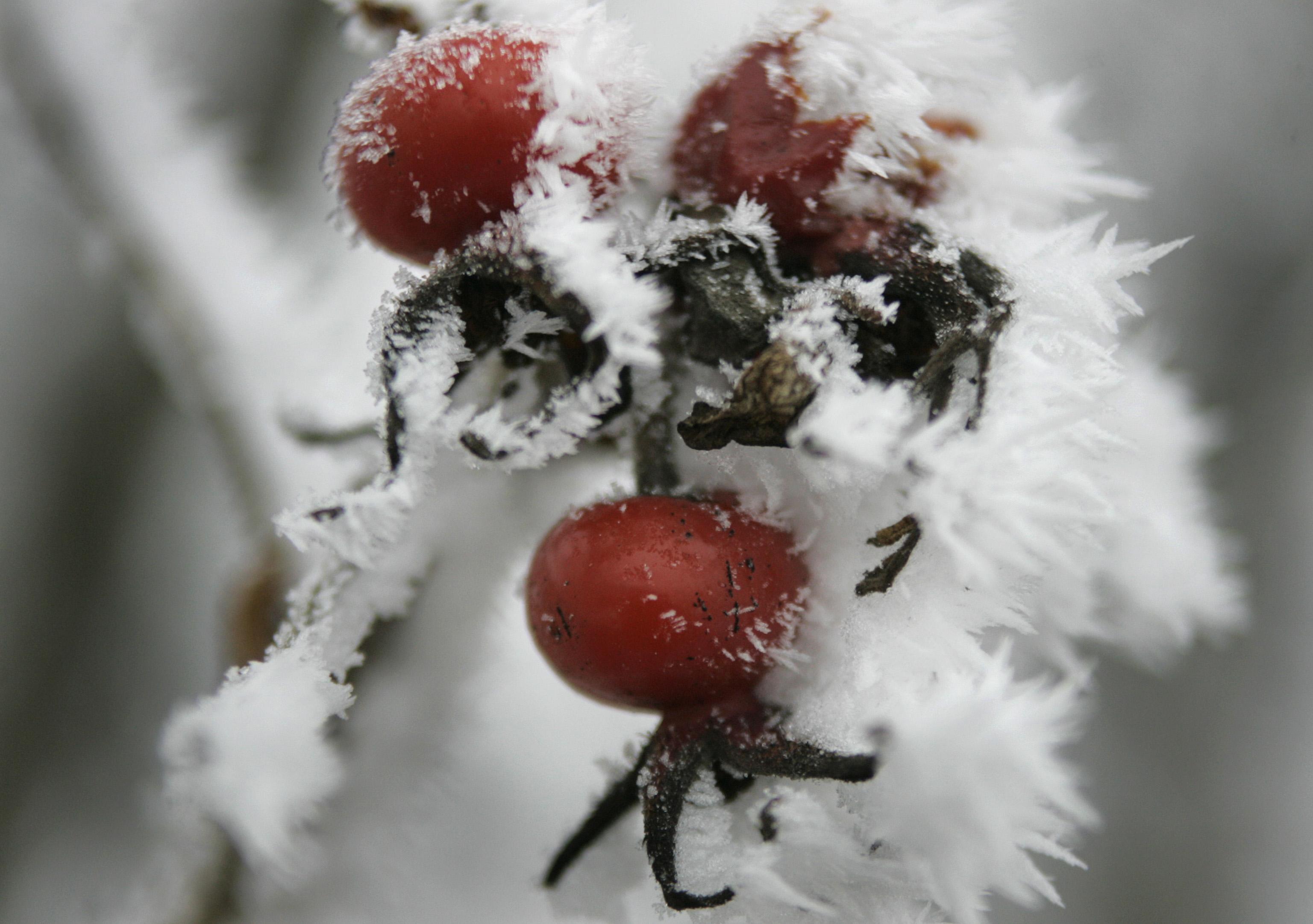 Frostige Früchte