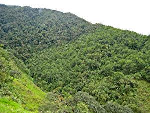 Das vom Münchner Forscherteam vorgeschlagene Landnutzungsportfolio: Der helle Waldbestand (rechts) zeigt Weideaufforstung mit der Anden-Erle, links genutzte Weidefläche. Der dunklere Waldbestand im Hintergrund ist Naturwald. (M.Weber/TUM)