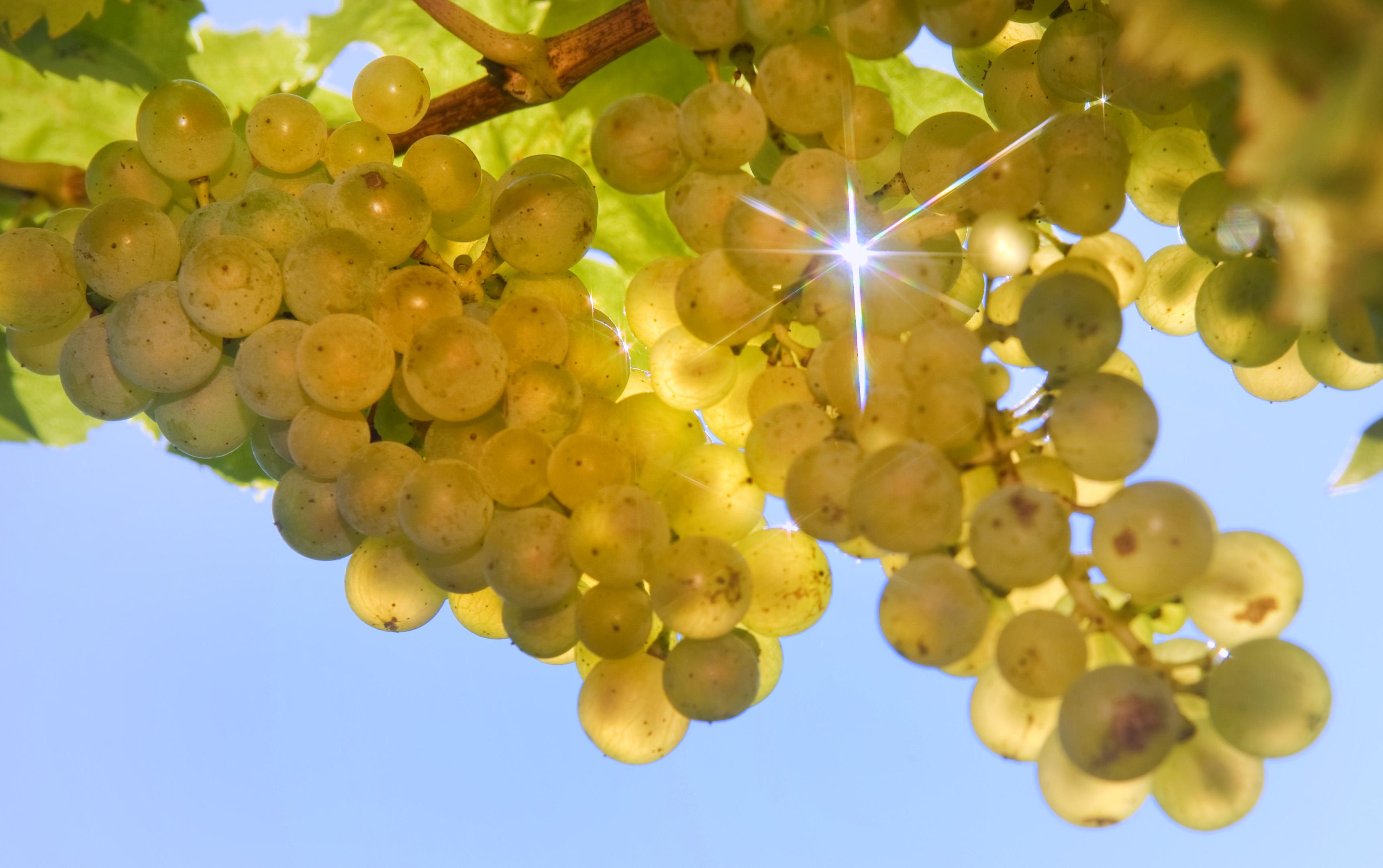 Früchte in der Sonne