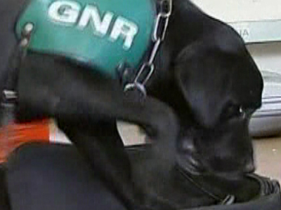 Portugal: Police Dog Sniffs Out CDs