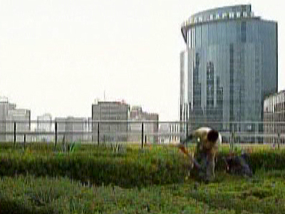 Mexico: Fighting against Global Warming with Roof Gardens