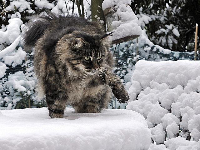 abc die katze lief im schnee. Black Bedroom Furniture Sets. Home Design Ideas
