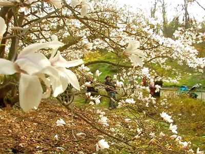 """""""Miracle Flowers"""" Blossom in Kyiv"""