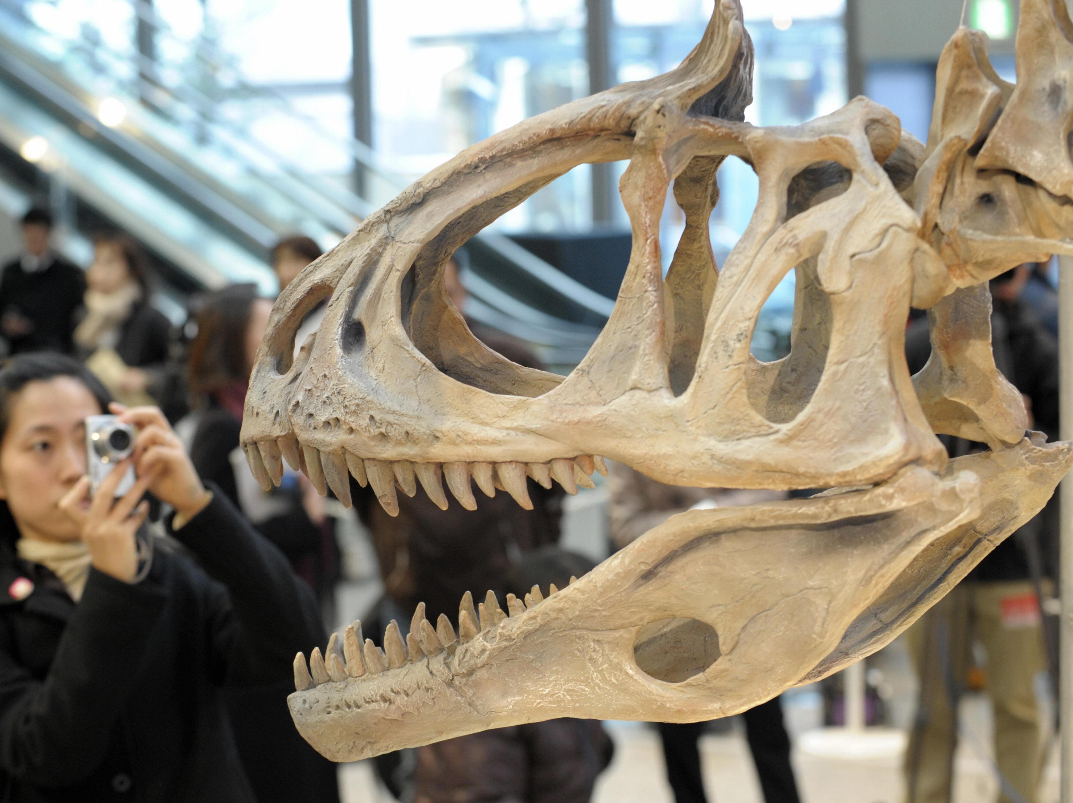 Waren Dinosaurier Warm- oder Kaltblüter?