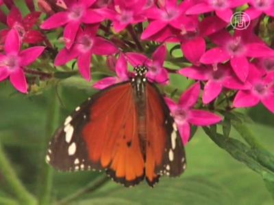 Israel: Rettung der Schmetterlinge vor dem Aussterben