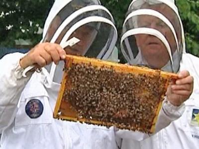 Possible Breakthrough in Breeding Parasite-Resistant Bee