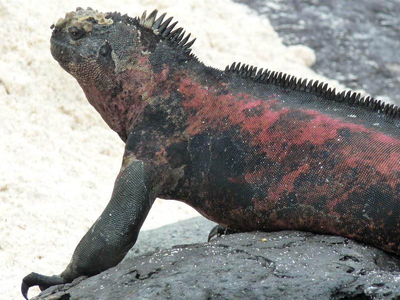 Galapagos – die Welt der Blaufußtölpel und Seelöwen