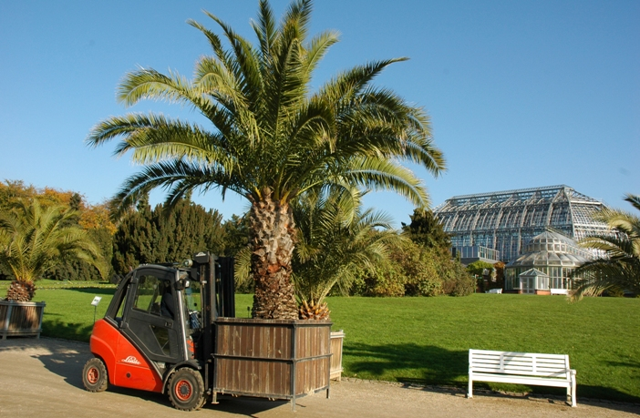 Die Palmen Werden Ausgeräumt Im Botanischen Garten Berlin Verlassen