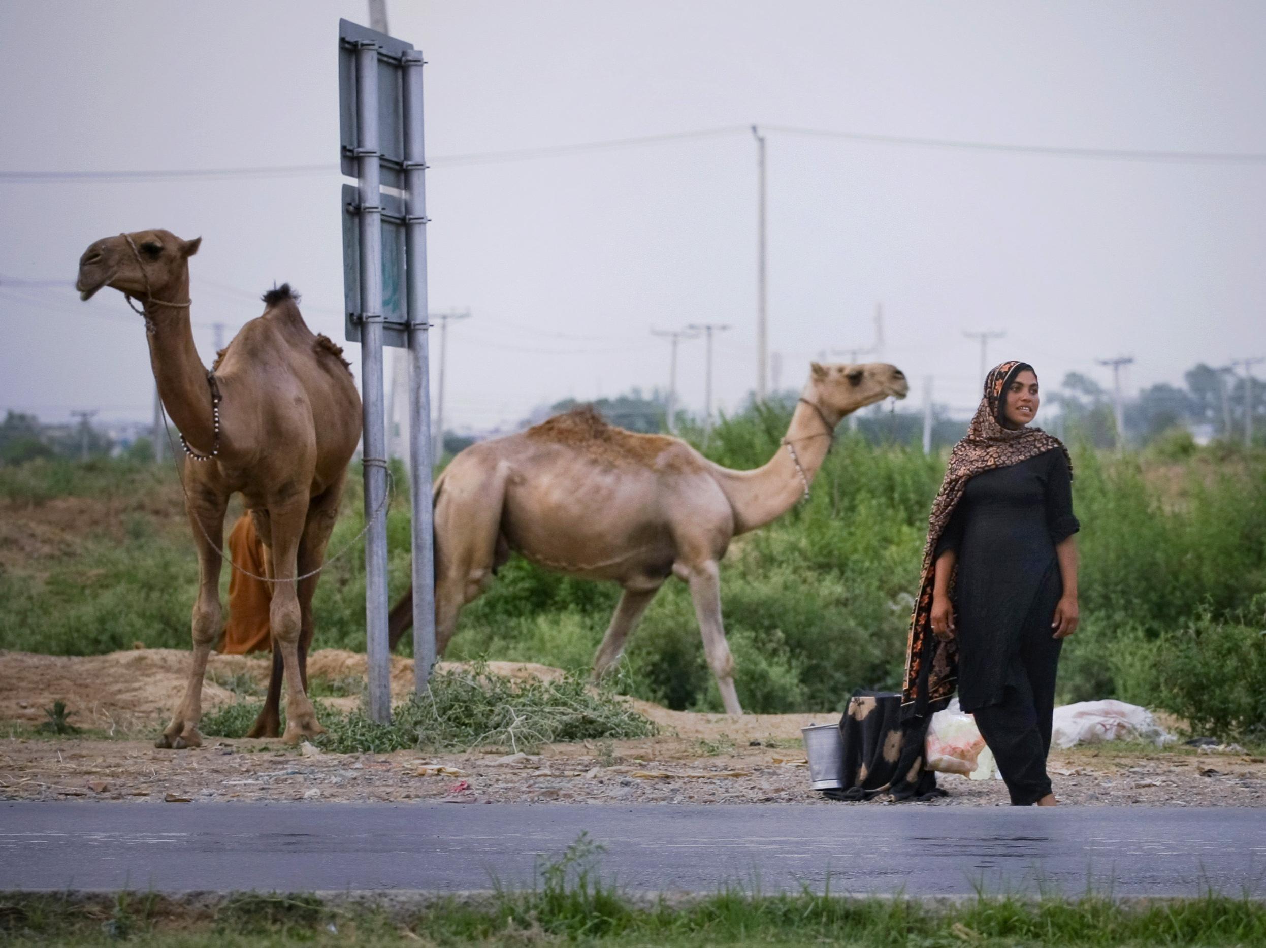 Handel mit Kamelmilch