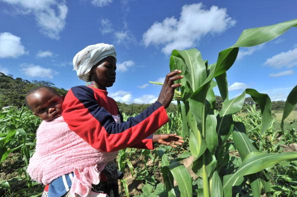 Malawi löst das afrikanische Hungerproblem
