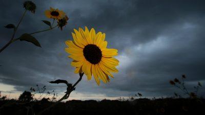 Blume im Sturm