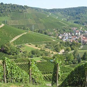 Weinberge laden zum Spazieren ein und machen Appetit auf Riesling, Müller-Thurgau, oder Schwarzriesling. Foto: Elke Backert