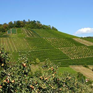 Herrliche Wandergegend um Stuttgart-Uhlbach. Foto: Elke Backert