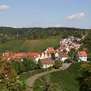 Weinberge um Stuttgart-Uhlbach. Foto: Elke Backert