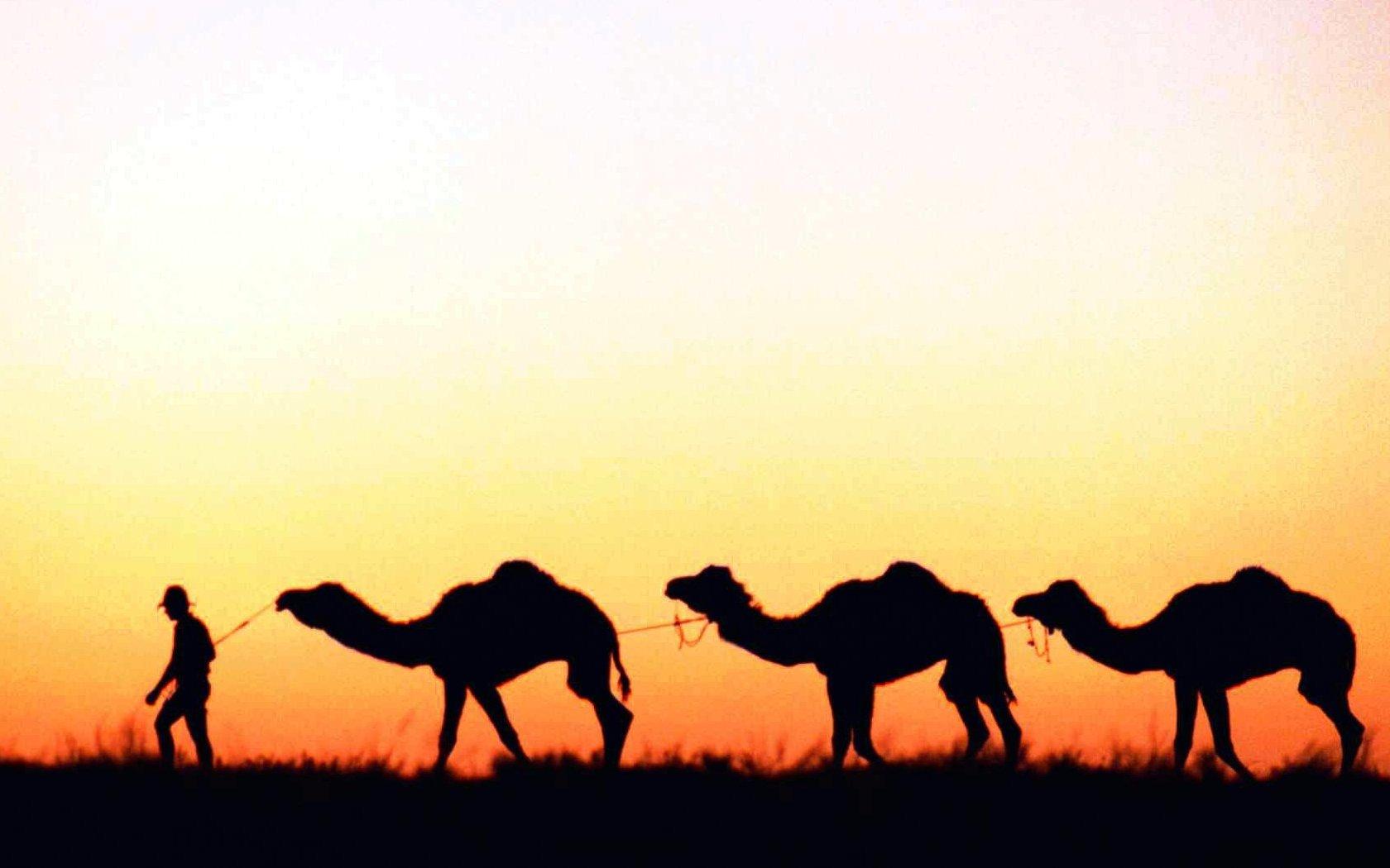 Weniger Wüstenbildung durch Nutztiere