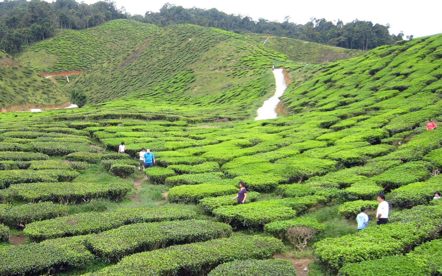Chajing: Das Buch vom Tee