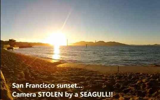 San Francisco: Möwe klaut Kamera und filmt Sonnenuntergang
