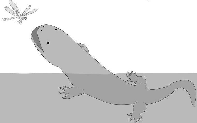 Der Ur-Riesensalamander war vielseitig
