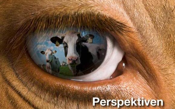 Nutztiere: Verbesserungspotenzial bei Luft aus Tierställen