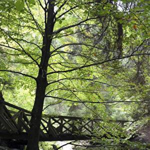 Wildromantische Ravenna-Schlucht  Foto: Bernd Kregel