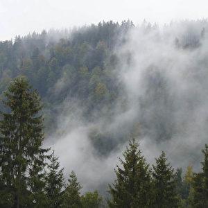 Aufsteigender Schwarzwald-Nebel.  Foto: Bernd Kregel