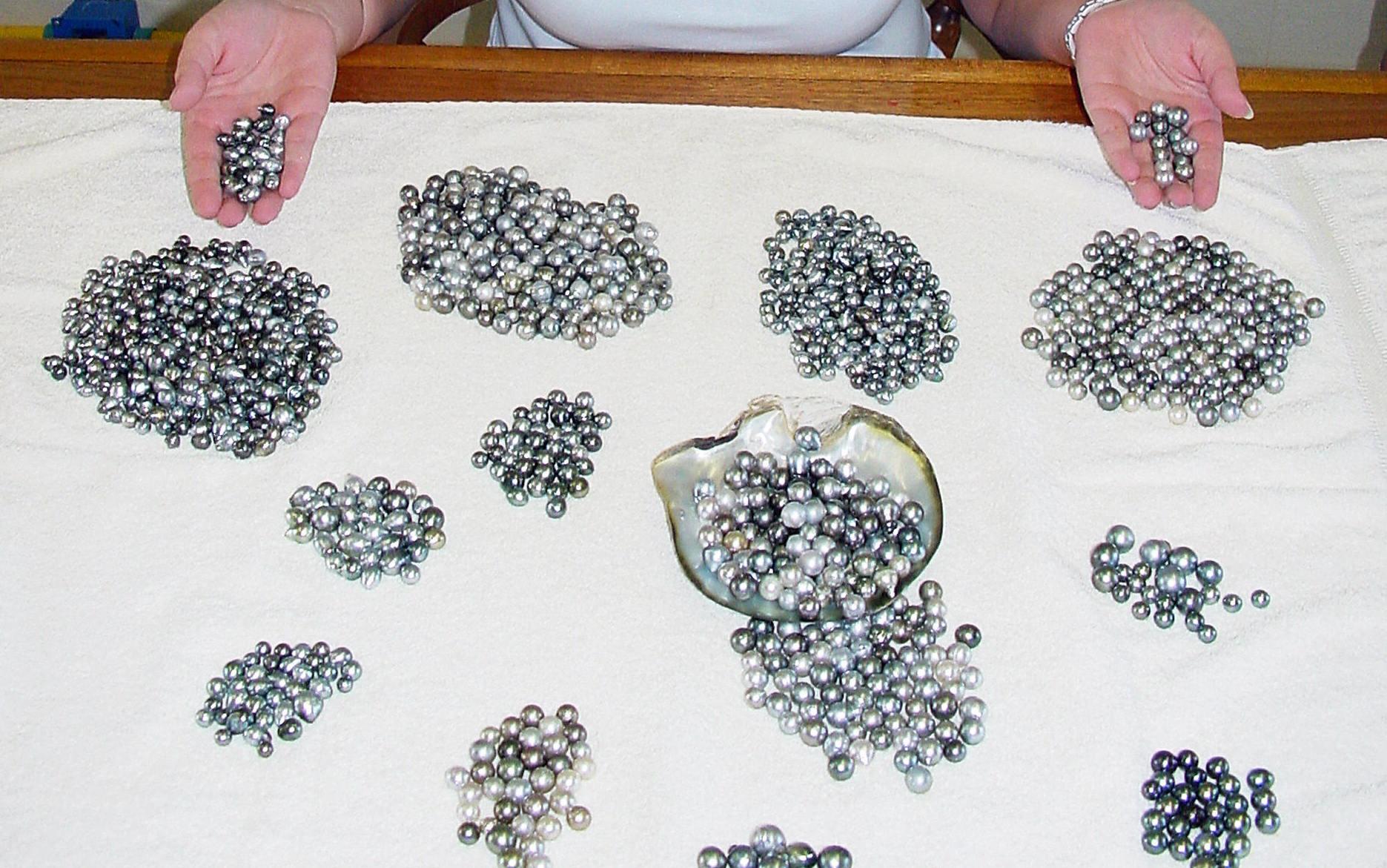 Perlen – die ungeschliffenen Edelsteine: Die wichtigsten Perlen-Arten