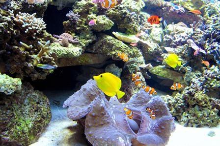 In den vergangenen 30 Jahren wurden nahezu 80 Prozent der Korallen an den Küsten von Festlandchina zerstört. Foto: AFP/Getty Images