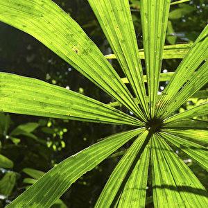 Malaysia: Grüne Dschungelkulisse im Sonnenlicht.  Foto: Bernd Kregel